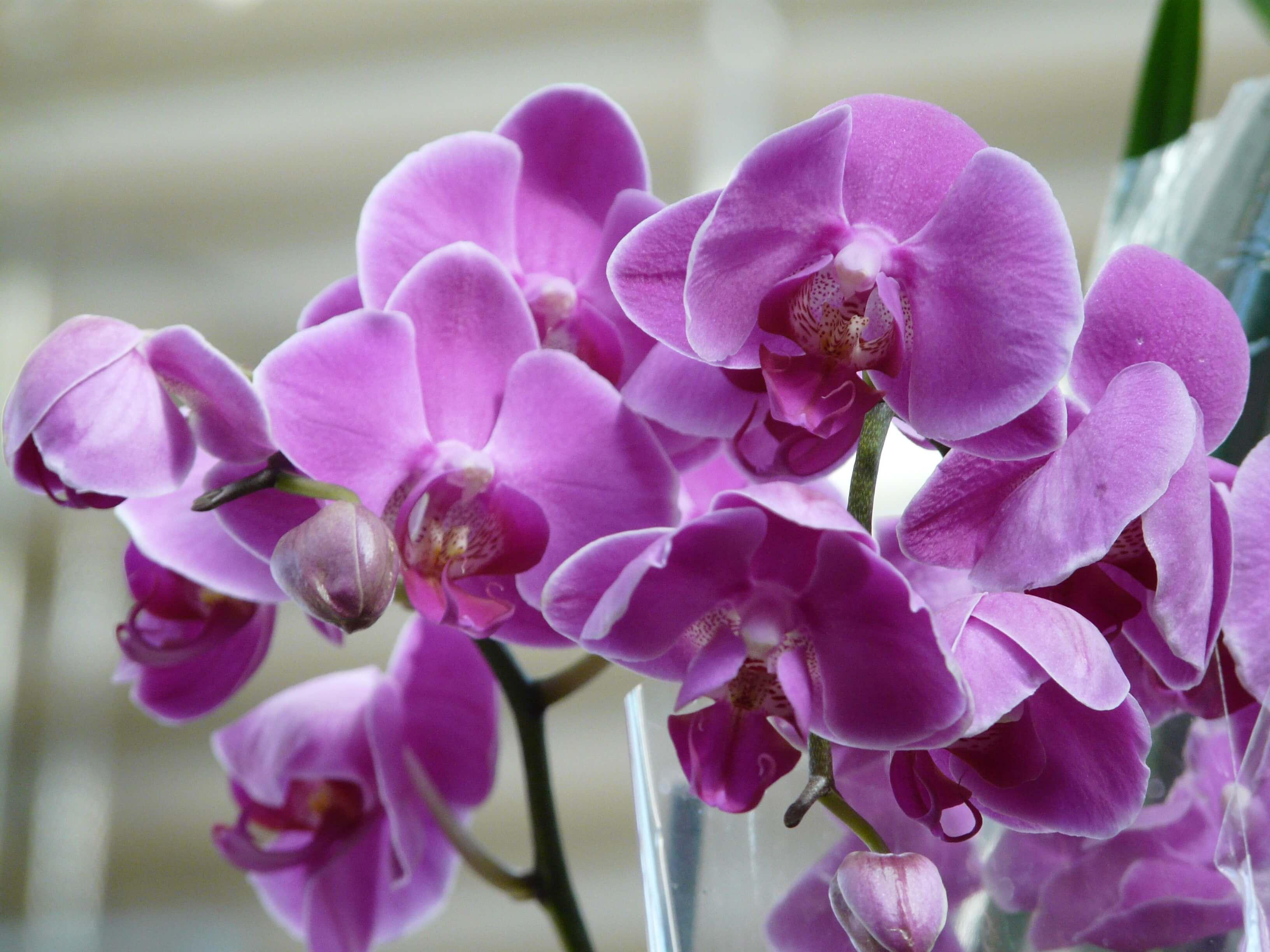 Все орхидеи на одном фото