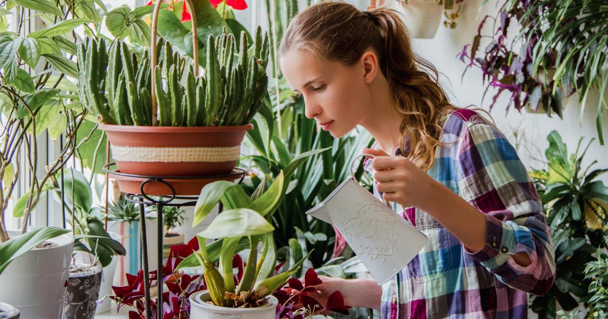 Как часто необходим полив комнатных растений || Виды полива комнатных растений