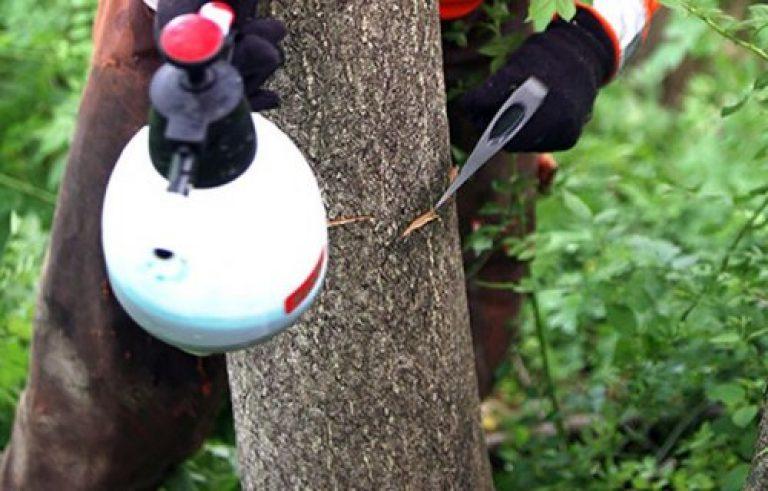 Как избавиться от ненужных кустарников на участке. Удаление древесной растительности арборицидами