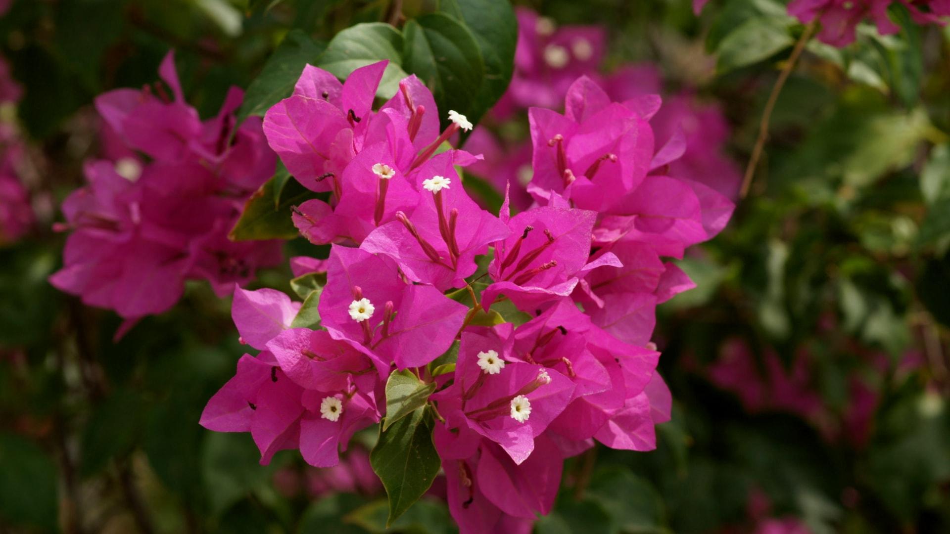 Какой цветок нужно держать дома для благополучия