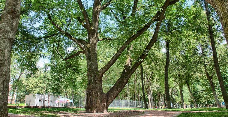 Растения лиственного леса