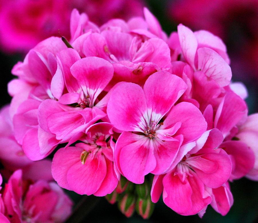Цветок который любит холодную воду