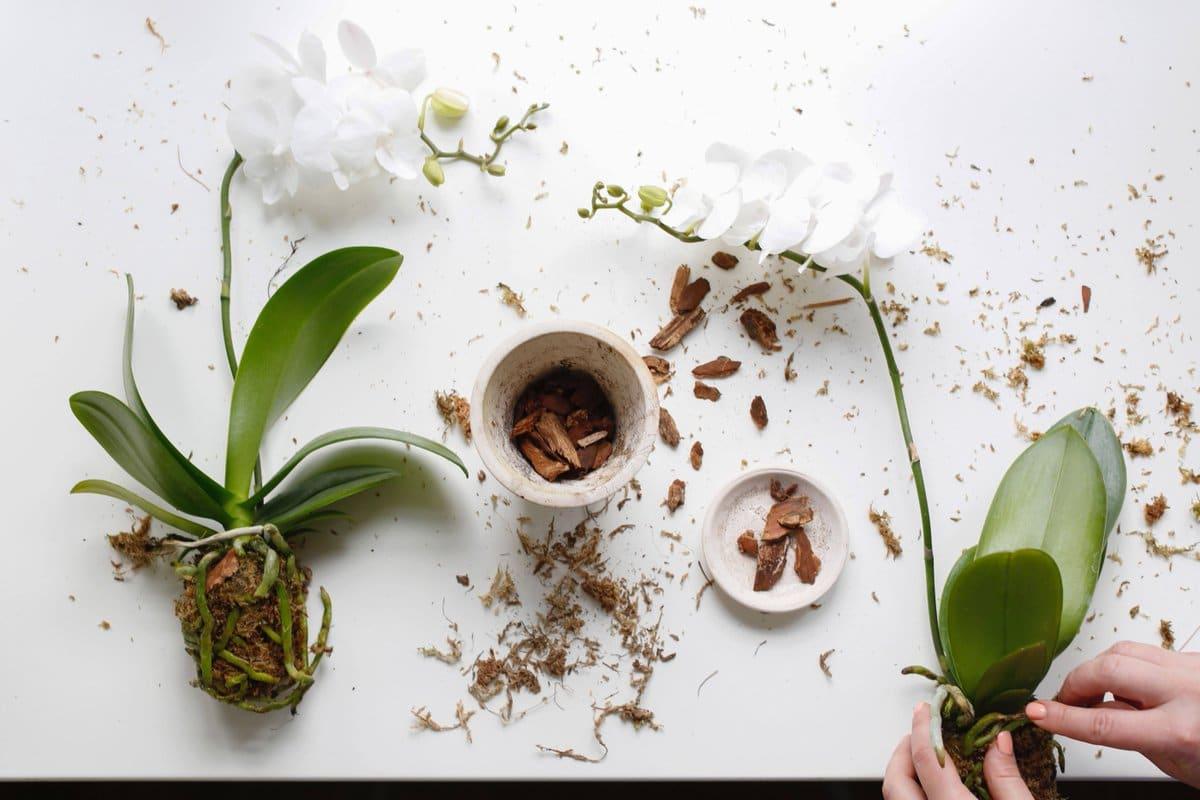 В какую землю сажать орхидею: подбор правильного субстрата
