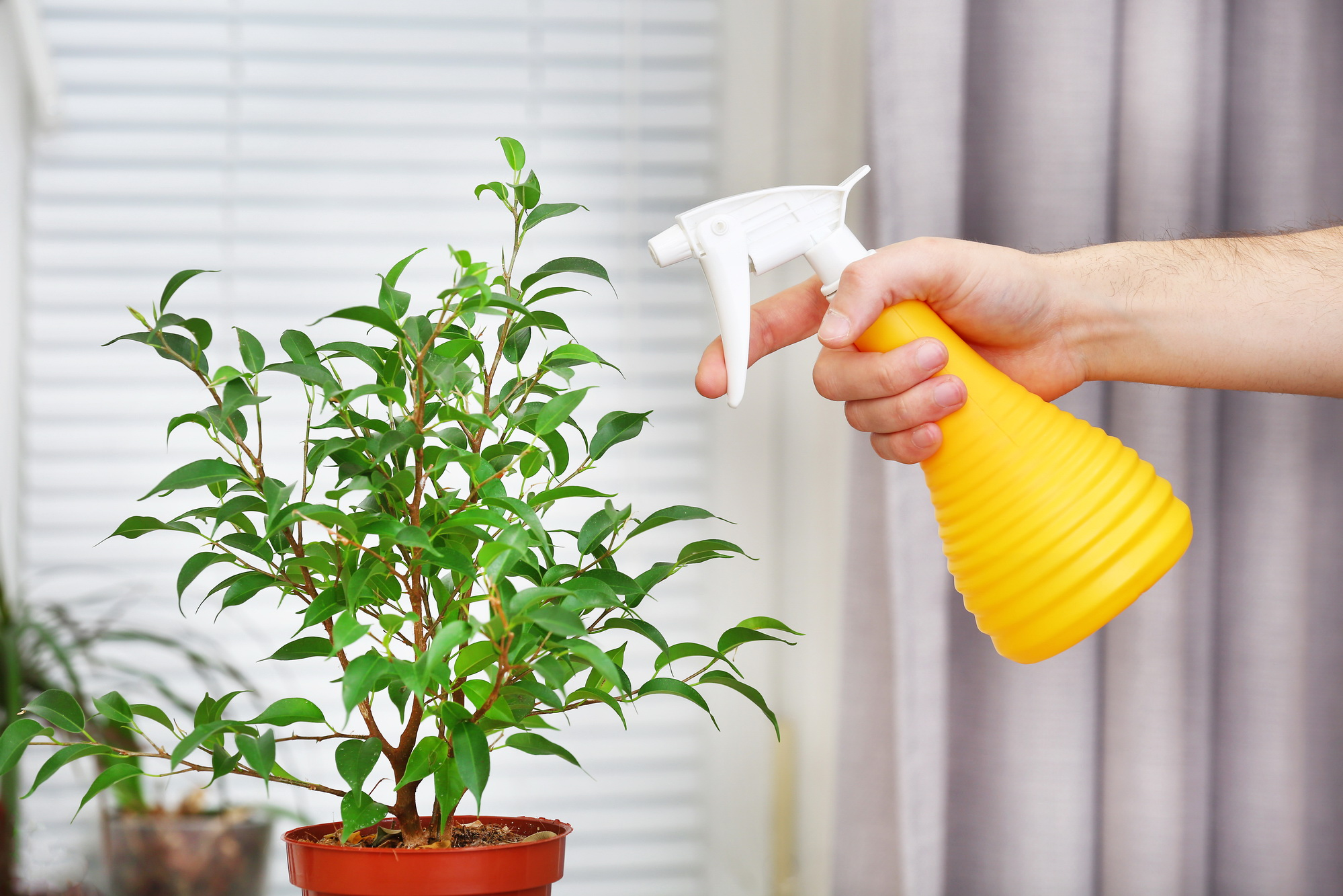 Сладкие капли на растениях