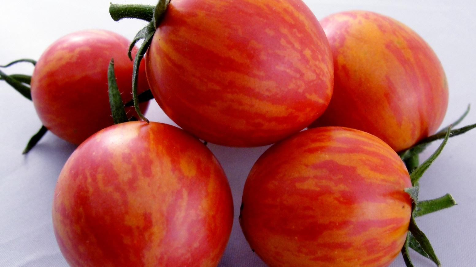 про полосатые томаты сорта фото милану