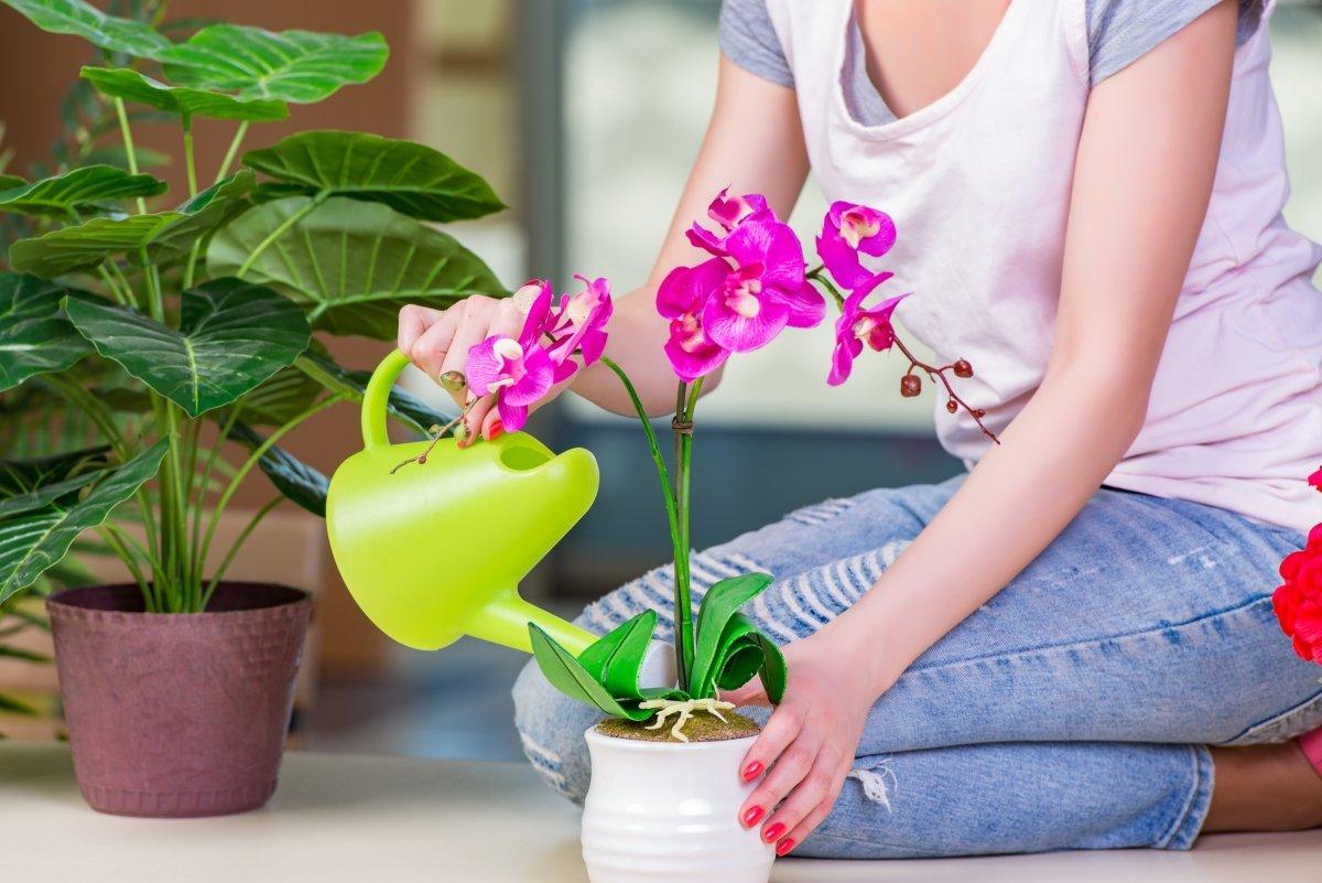 Рассказываем, что делать, если орхидеи не цветут