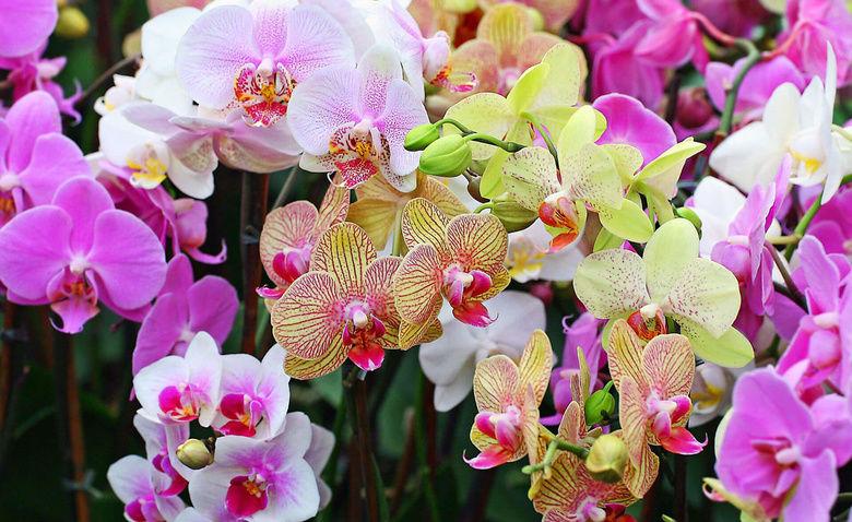 Что делать, если на цветоносе орхидеи появился цветонос?