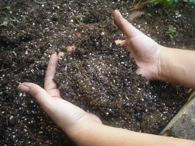 Как удобрить огород весной