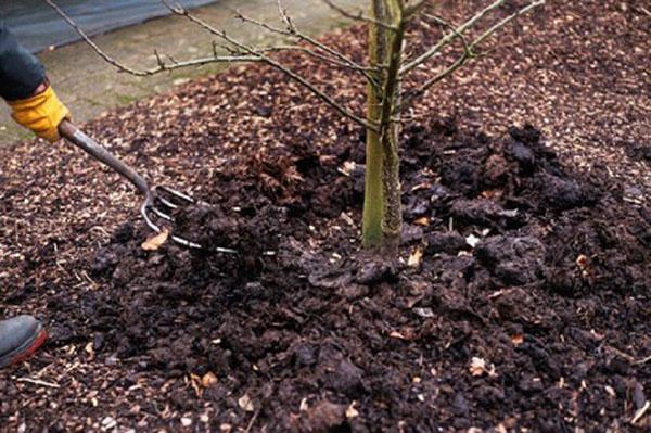 Подкормка плодовых деревьев и кустарников весной и удобрение почвы