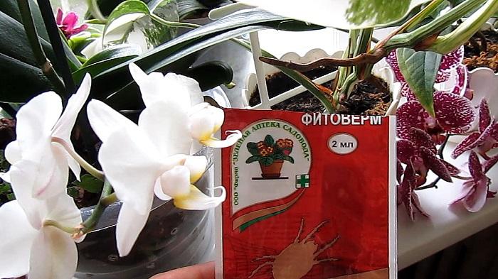 Почему опадают бутоны у орхидеи: основные причины сбрасывания