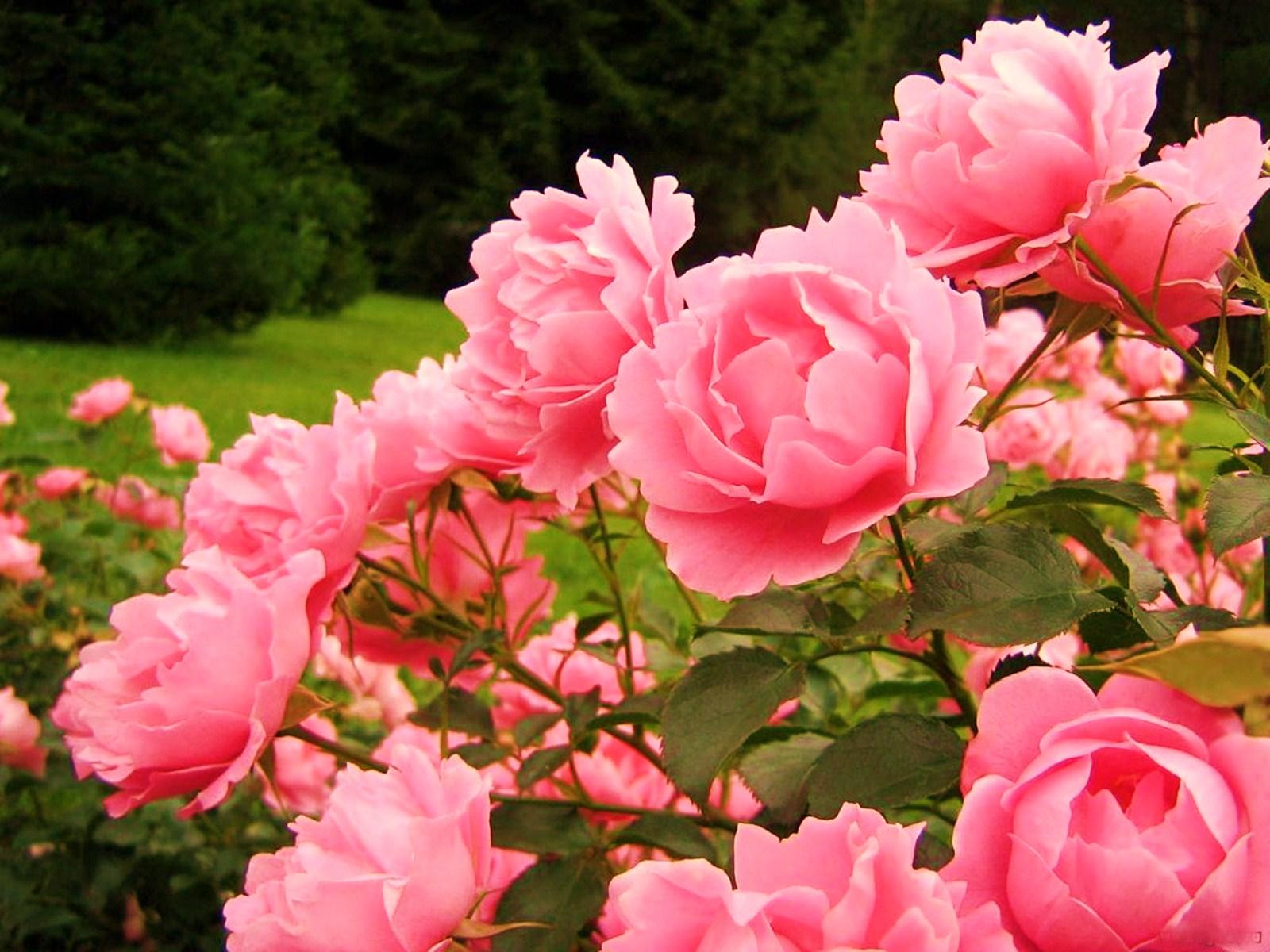 Как называются маленькие розы в букете