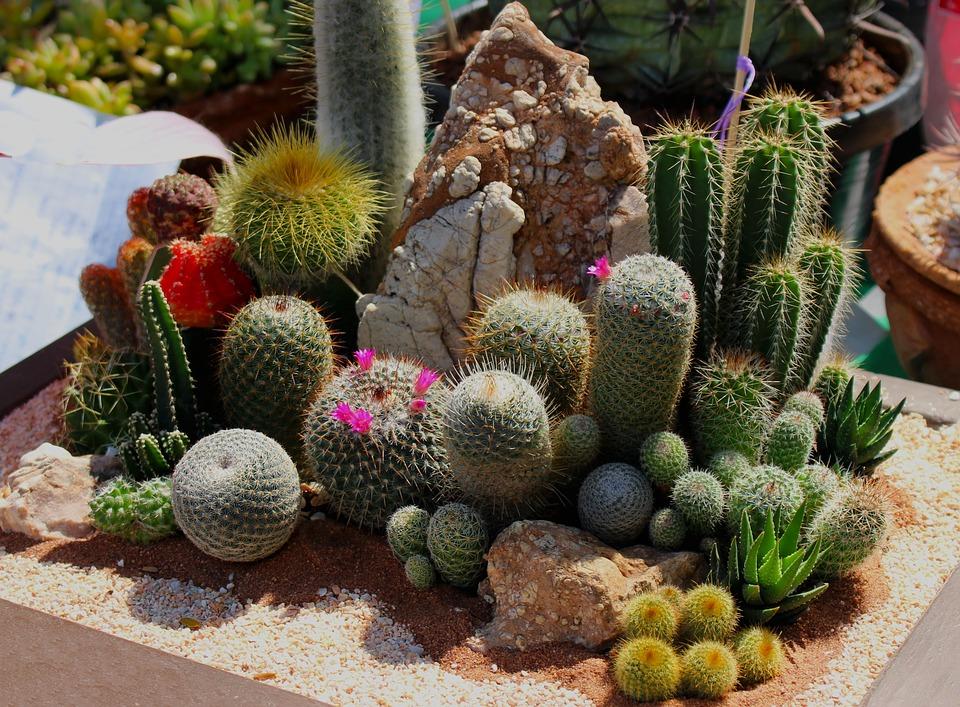 Виды кактусов: описание и характеристика