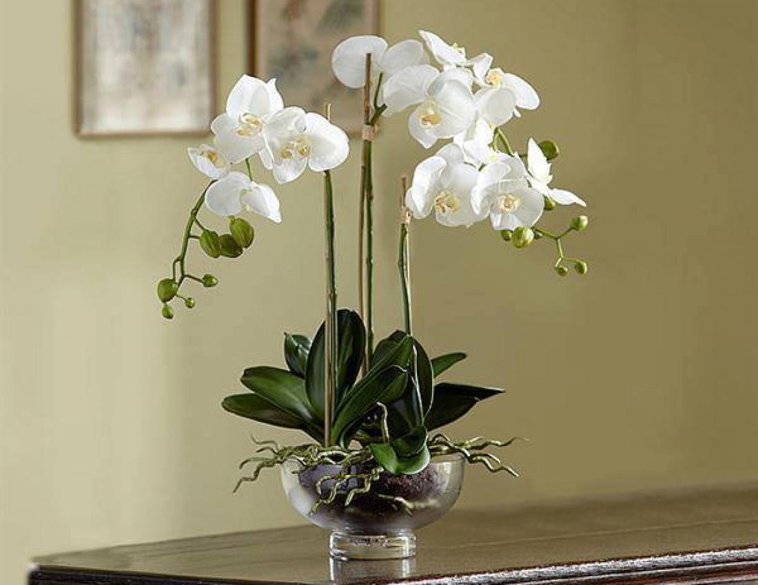 Если засохла орхидея можно ли ее восстановить