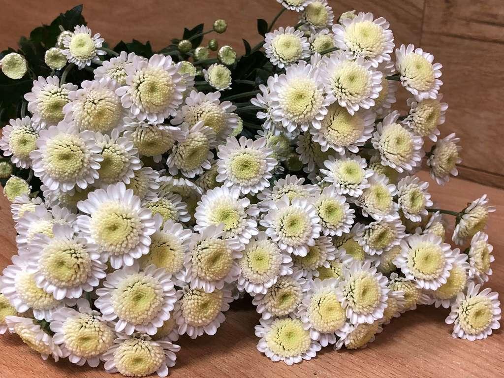 Как укоренить хризантему осенью в домашних условиях