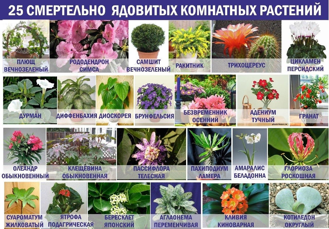 Список с картинками комнатных растений