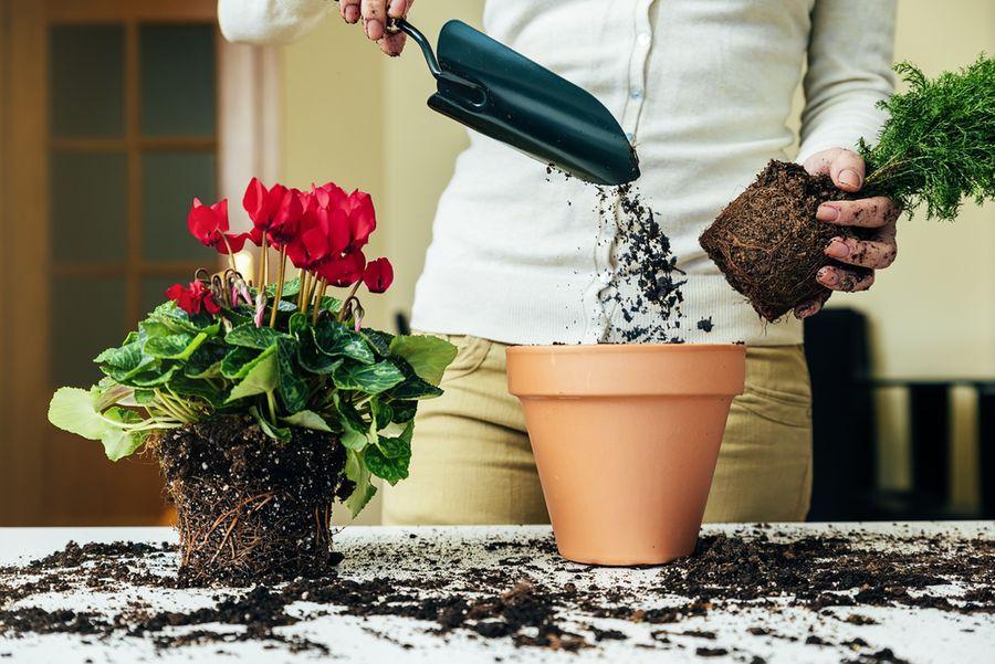 Как вырастить шикарные комнатные цветы thumbnail