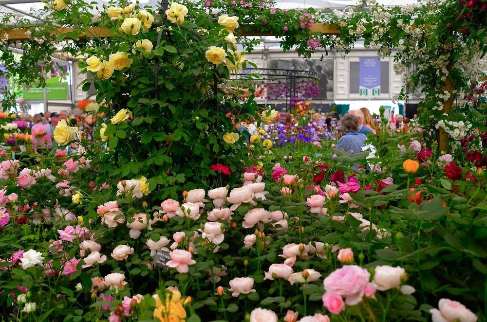 Розы Дэвида Остина 55 фото названия и описания остинских роз лучшие новые сорта для Сибири и других регионов