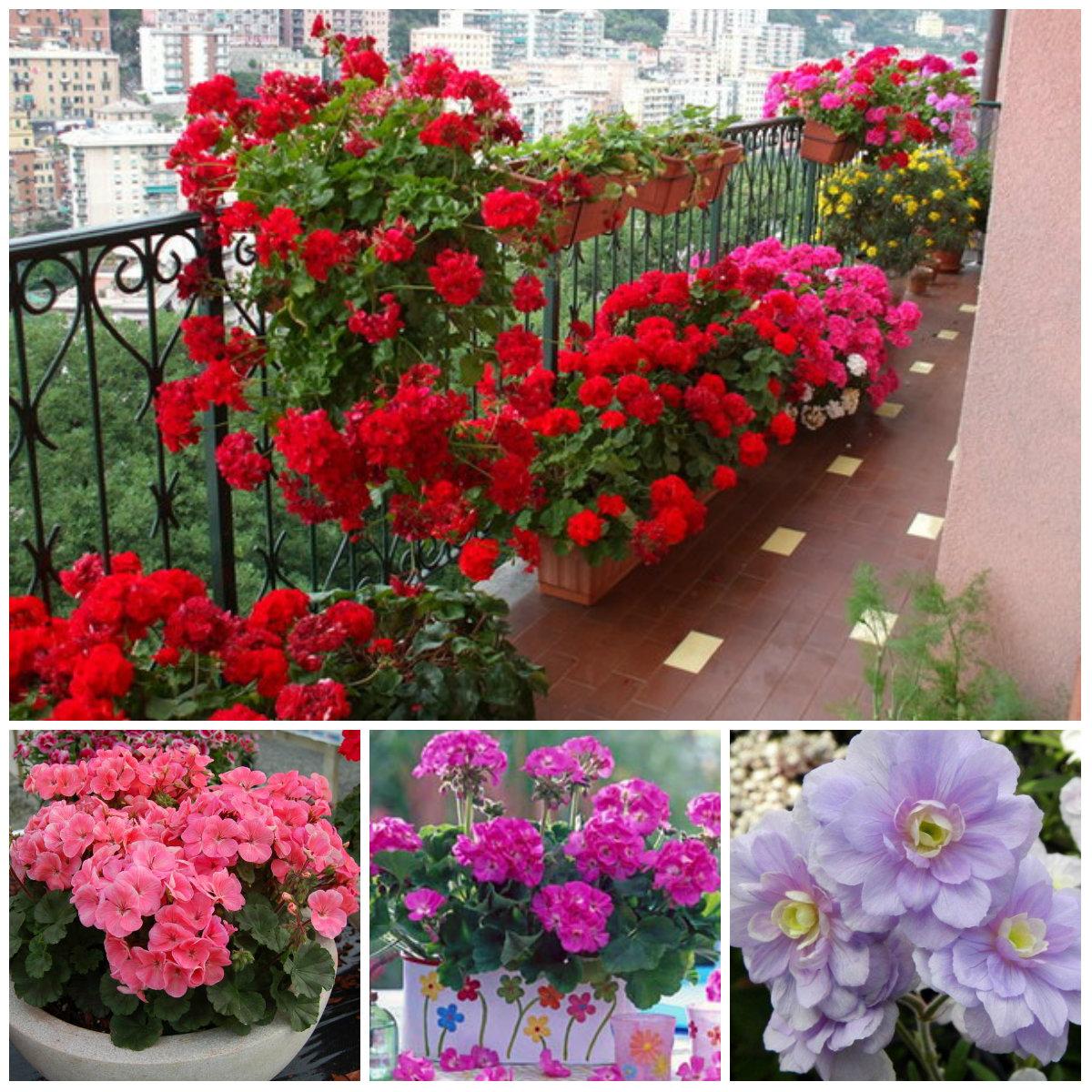 Цветы для дома цветущие постоянно