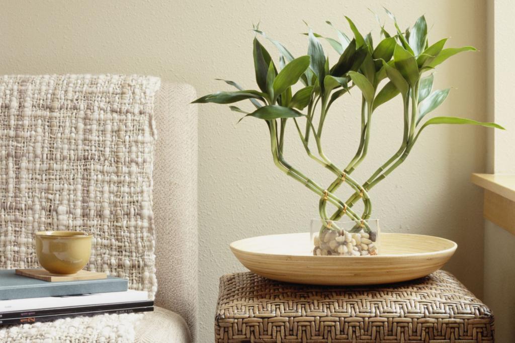 Как растет декоративный бамбук