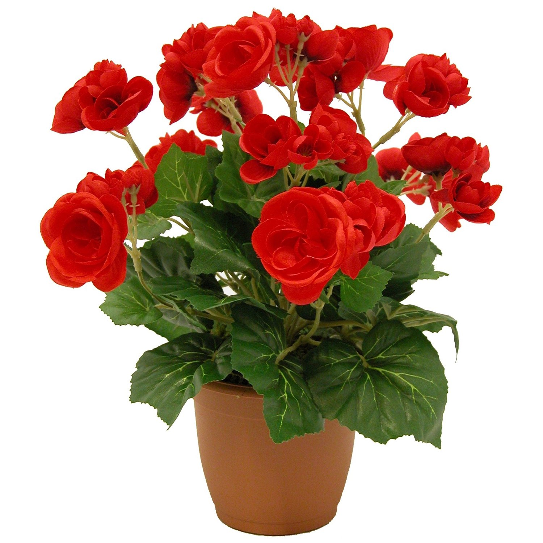 Какие домашние цветы неприхотливые в уходе