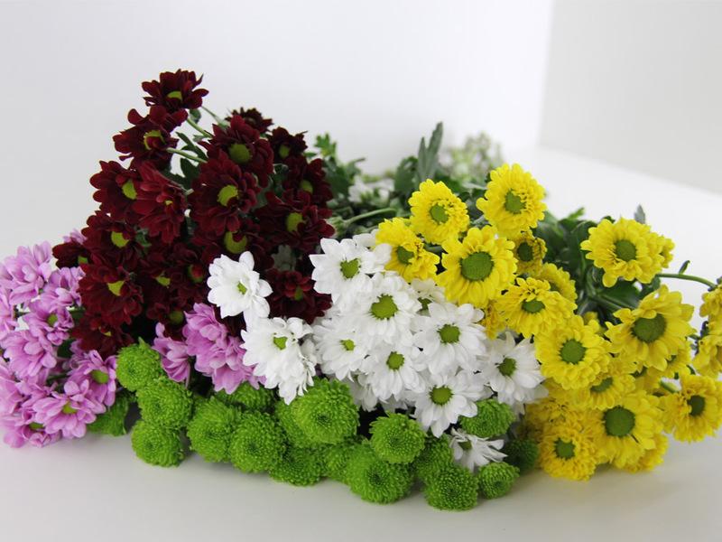 Сорта хризантем с фото и названиями