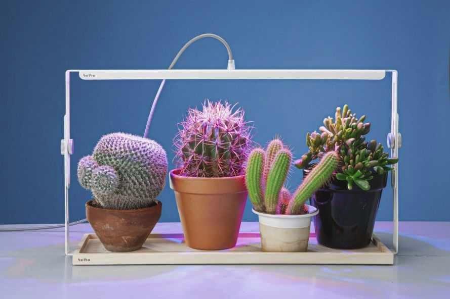 Как обновить кактус в домашних условиях