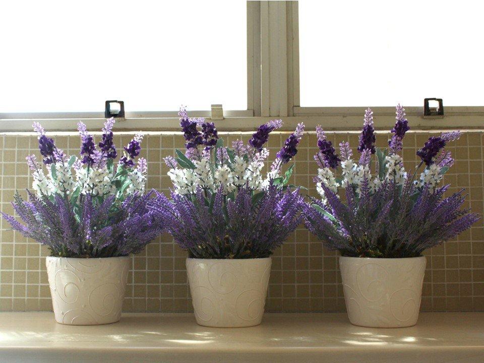 Можно ли выращивать в домашних условиях лаванду?