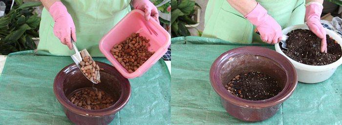Спатифиллум пересадка после покупки, грунт, горшок, фото