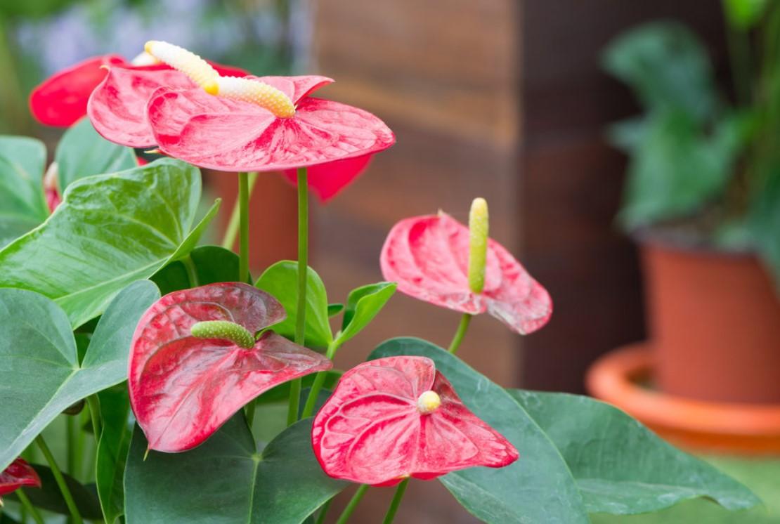 Каталог комнатных цветов и растений с фото и названиями