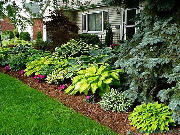 Секрет посадки хосты в цветник — Садоводам и огородникам