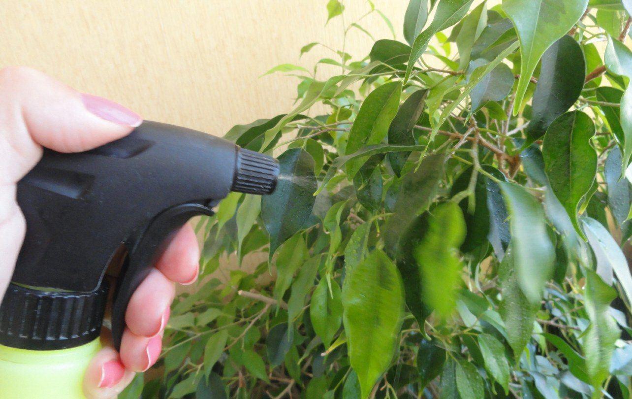 Как бороться с щитовкой на комнатных растениях в домашних условиях