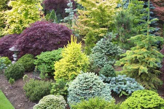 Все хвойные деревья и кустарники вечнозеленые