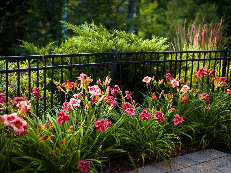 Чем подкормить лилии Как подкармливать их весной для пышного цветения в саду Правила подкормки летом в период бутонизации