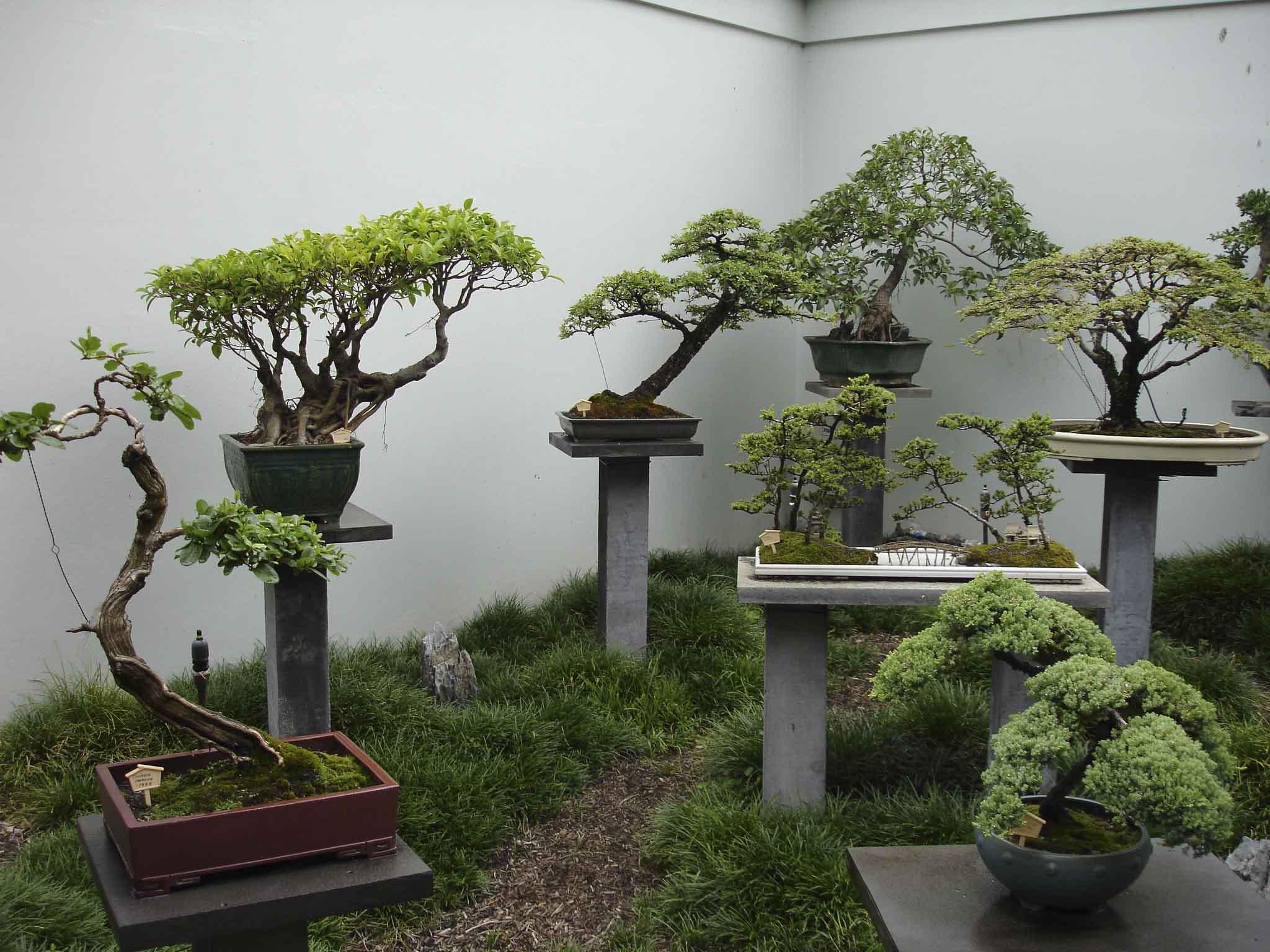 Комнатное дерево с длинными листьями