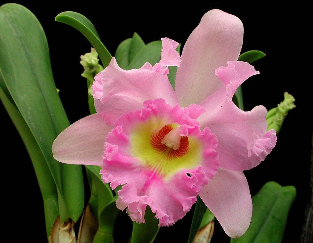 Удобрение для орхидей: чем и как подкормить в домашних условиях