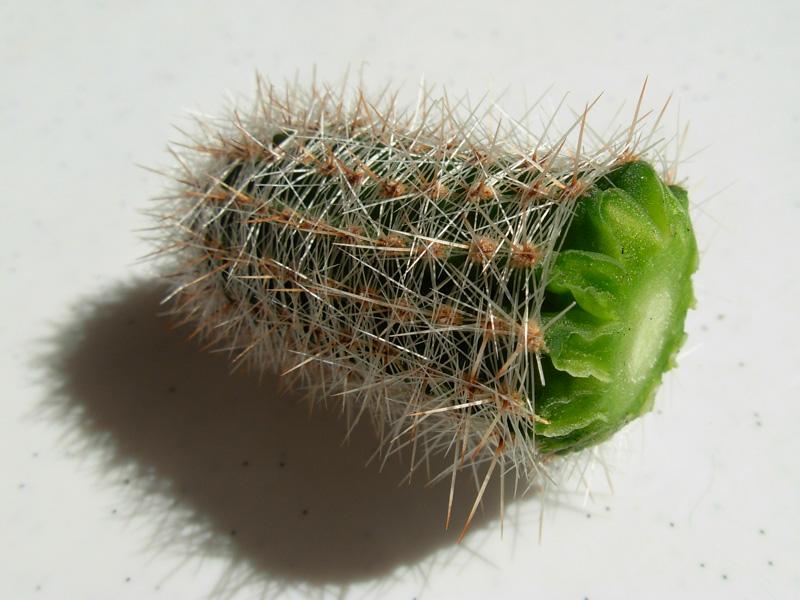 Почему кактус уменьшился в размере