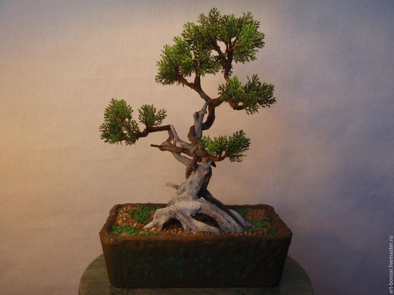 Комнатные деревья- виды с фото, уход, полив и пересадка