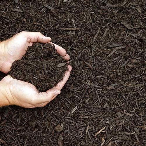 Как вырастить лаванду дома в горшке