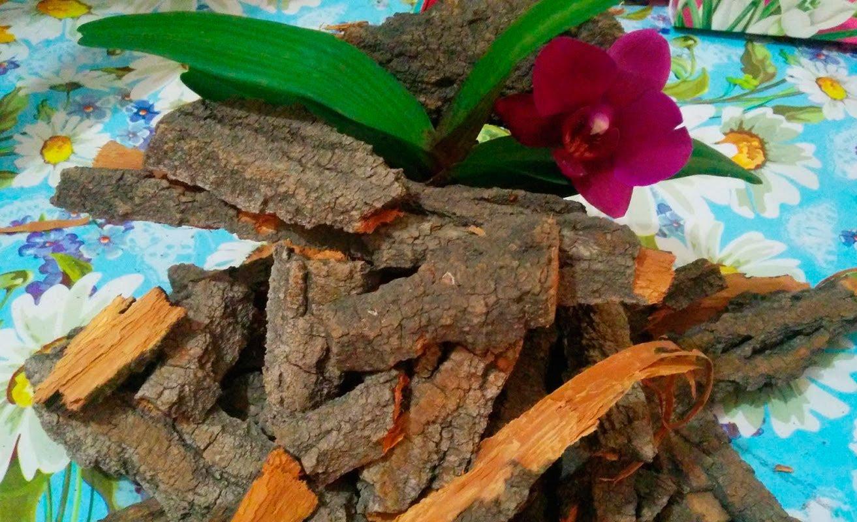 Воздушные корни орхидеи строение, назначение, как выглядят больные, здоровые, почему гниют, способы лечения, полезные советы