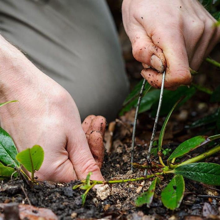 Выращиваем флокс Друммонда из семян – описание популярных сортов флоксов