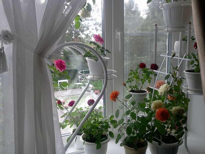 Тропические домашние цветы