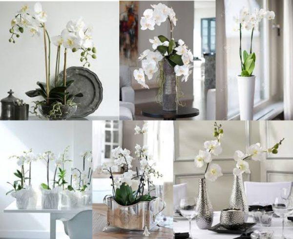 Орхидея Цимбидиум: посадка, уход и размножение в домашних условиях, фото