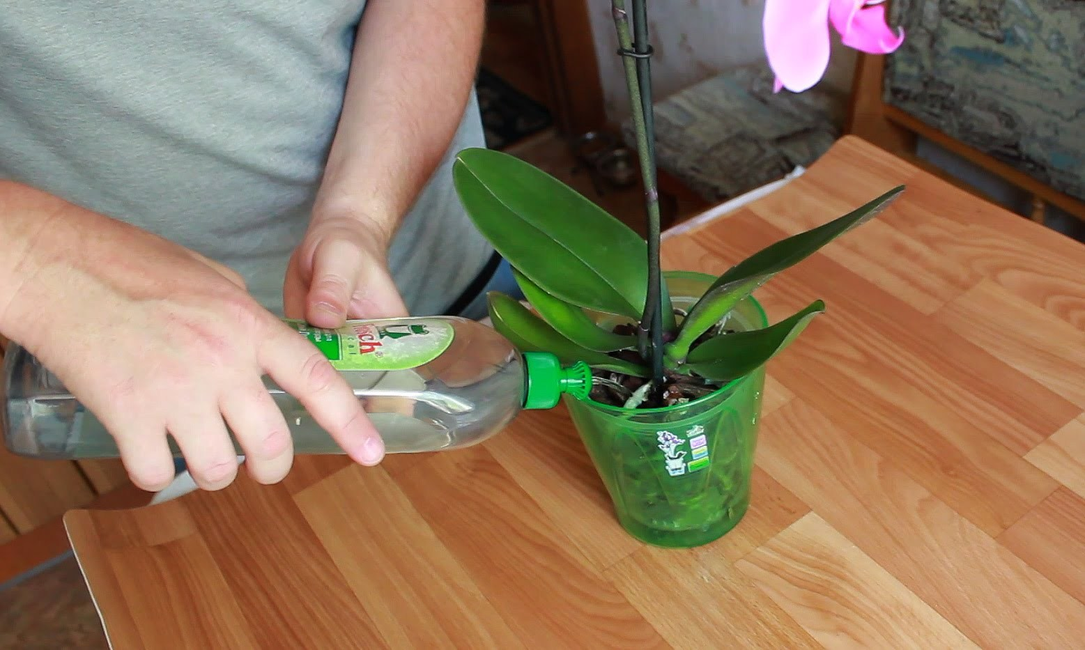 Орхидея Цимбидиум: выращивание и уход