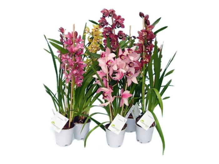 Грунт для фаленопсиса своими руками и состав почвы для орхидеи, какой субстрат лучше и как подготовить грунт для высадки