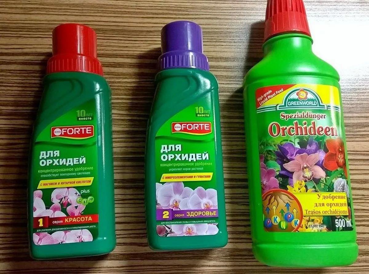 Как поливать орхидею во время цветения: советы профессионалов