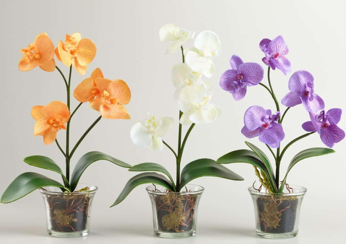 Размер горшка для орхидеи фаленопсис