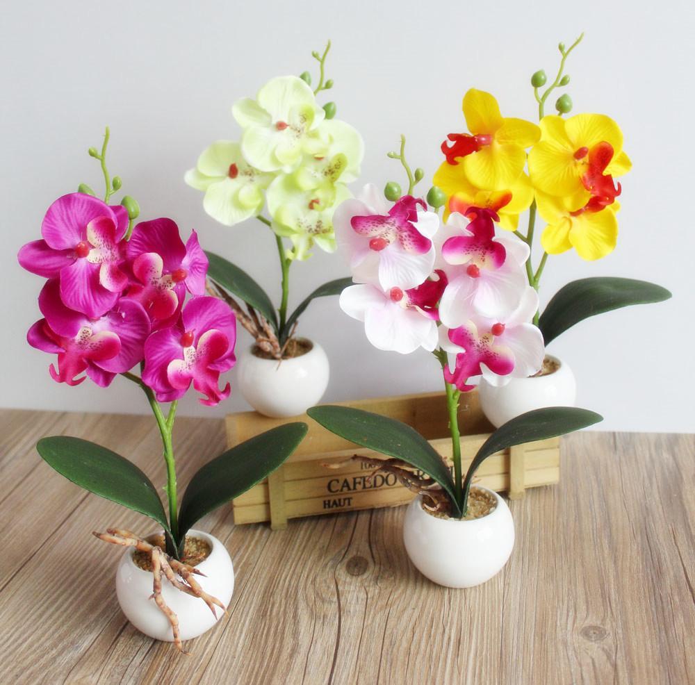 Диаметр горшка для орхидеи