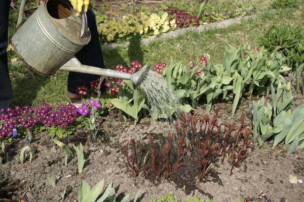 Древовидный пион - группы, сорта и особенности выращивания культуры из семян и саженцев