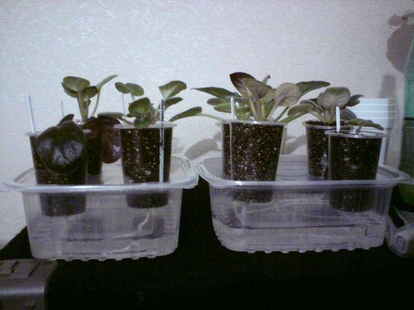 Автополив для комнатных растений