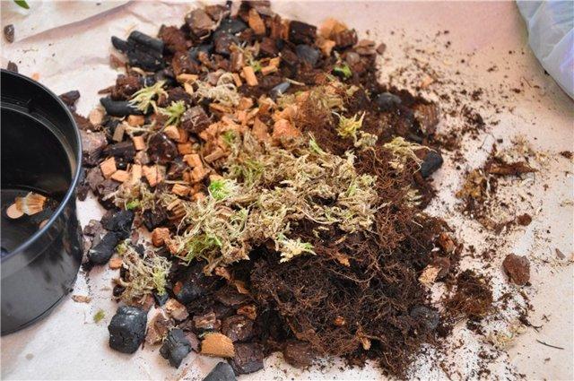 Почва для ароидных растений состав